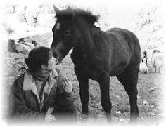 """Communicative Horses"" - How It Begins Imke Spilker"