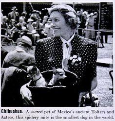 1920 Chihuahua Photo by Pietoro