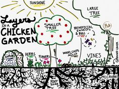 Gardening For Beginners Grow a sustainable garden for your backyard chickens to save money on their feed bill. Plant herbs, shrubs and trees for a holistic, permaculture homestead. Great DIY ideas for beginners and beyond. Backyard Garden Landscape, Small Backyard Gardens, Garden Shrubs, Small Gardens, Gravel Garden, Potager Garden, Shade Garden, Chicken Garden, Backyard Chicken Coops