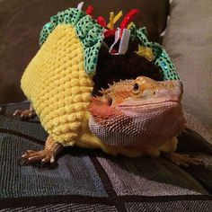 Adorable Pets In Funny Taco Suits From Petco