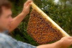 Winterizing yoir bees the natural way James Ziting with a top bar comb