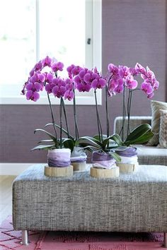 Purple Orchids are a lovely and unique treasure ©Anthura #phalaenopsis #PortElisabeth #purple