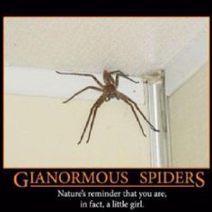 Giant Spider-demotivational posters Natures reminder that you are, in fact, a little girl Scared Of Spiders, Huge Spiders, Black Spiders, Funny Picture Quotes, Funny Quotes, Funny Pictures, Funny Pics, Crazy Pictures, Funny Memes