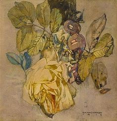 View Winter rose by Charles Rennie Mackintosh on artnet. Browse upcoming and past auction lots by Charles Rennie Mackintosh. Charles Rennie Mackintosh, Floral Illustrations, Botanical Illustration, Botanical Art, Illustration Art, Fleurs Art Nouveau, Art Nouveau Flowers, Art Aquarelle, Glasgow School Of Art