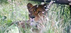 Wilde dieren en planten leven op de 100 hectare van de ongerepte natuur! Parc du Reynou, Domaine du Reynou, 87110 Le Vigen, Frankrijk