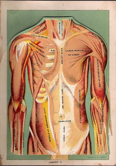 Antique 1917 Medical Flip Chart of the Body by VintageFosterCare, $24.00