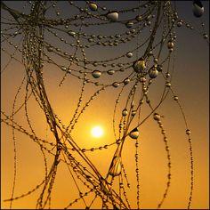 Liquid Gold Sunrise Droplets
