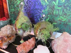 Set of 2 succulent plant glass terrariums (round and tear drop) on stands- hen and chicks and sedum plants