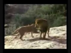 Christian the Lion Reunion... one of the most heartwarming stories I have ever seen.