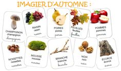 Imagier Automne et activités Pre Reading Activities, Fall Preschool Activities, French Games For Kids, Leaf Crafts, Play Based Learning, Autumn Crafts, Teaching French, Autumn Theme, Science And Nature