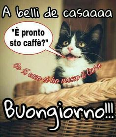Cats And Kittens Quotes Mornings 61 Ideas For 2019 Good Morning Quotes For Him, Good Morning Good Night, Cat Eye Tutorial, Kitten Quotes, Italian Memes, Super Cat, Funny Illustration, Cat Sleeping, Cat Room