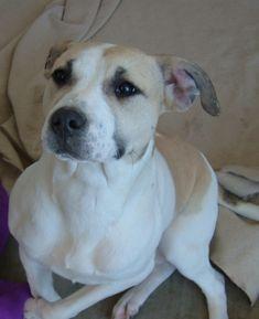 Rescue Dogs Noblesville In