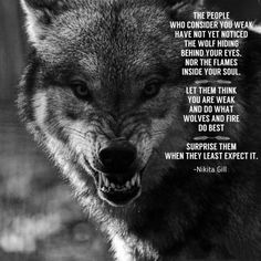 Famous Wolves Quotes Images Please visit our website, we have a lot of funny and interesting photos. Wolf Pack Quotes, Wolf Qoutes, Lone Wolf Quotes, Wisdom Quotes, True Quotes, Words Quotes, Sayings, Quotes Images, Loner Quotes