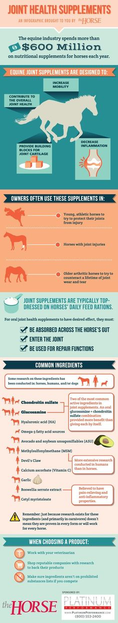 Horse Deworming Schedule Chart Stable and equine Pinterest - equine release form