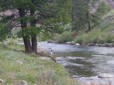 Fishing for giant Lahontan cutthroat trout on the Truckee.