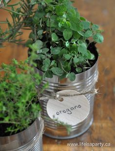 herbs in tin cans 1