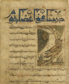 Folio from a Manafi'al-hayawan (Usefulness of animals) by Ibn Bakhtishu (d.1058); recto, Two owls perching in a tree; verso, Medicinal property of owl's body organs early 14th century Il-Khanid period  Ink, opaque watercolor and gold on paper H: 24.2 W: 19.9 cm  Tabriz, Iran  Purchase F1944.54  Freer-Sackler | The Smithsonian's Museums of Asian Art
