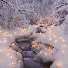 Christmas lights in the snow! Santa please bring me a house in the country on a little creek!!