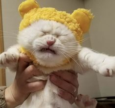 A Marvelous Menagerie: 53 Of The Most Interesting Animal Photos You Will See Today – Animals Animals And Pets, Baby Animals, Funny Animals, Cute Animals, I Love Cats, Crazy Cats, Cool Cats, Gatos Cool, Interesting Animals
