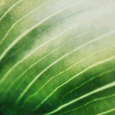 © @missiride Instagram Caminos de vida verde, macro fotografía hoja verde #macro #fotografia #hoja #verde #instagram #photography #texture #veins #naturaleza #nature #beauty #life #vida #green #leaf