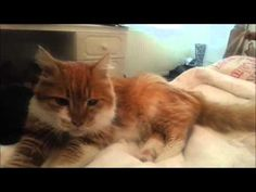 A purr from Smudge the cat