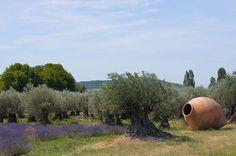 Provencal olive trees