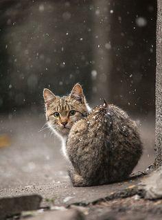 Comment ça l'hiver ? Un instant pas deux l'un derrière l'autre quand même !