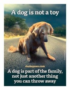 Emotional Quotes about Dogs is Family Images