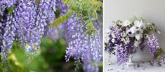 Wisteria and wisteria flower arrangement Wedding Gowns, Lace Wedding, Wedding Cakes, Lace Design, Wisteria, Flower Arrangements, Glass Vase, Flowers, Plants