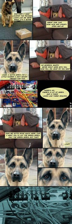 Why dogs aren't bomb technicians.