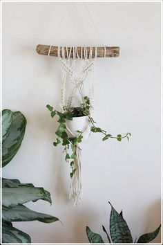 Macrame Plant Hanger on Driftwood #macrameplanthanger #fallandfound
