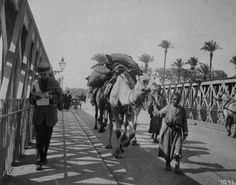 british egypt   British Protectorate over Egypt: Economy (1882-1922)