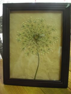 Queen Anne's Lace Pressed Flower Art by PressedFlowerShop on Etsy Dried And Pressed Flowers, Pressed Flower Art, Dried Flowers, Queen Anne's Lace Flowers, Leave Art, Floral Wreaths, House Inspirations, Queen Annes Lace, Creative Embroidery