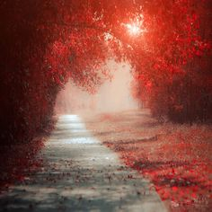 Beautifully Enchanting Pathways in Nature by Ildiko Neer