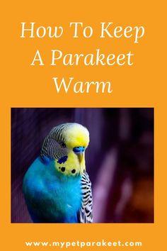 Budgies, Kinds Of Fruits, Kinds Of Birds, Healthy Treats, Yummy Treats, Parakeet Talking, Pet Bird Cage, Red Pigment, Adoption Process