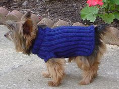 I designed this sweater for my Yorkie, Sparky. I had never seen a dog sweater in person before, and at the time, I couldn't find many patterns on the internet. So this is what I came up with after taking his measurements.