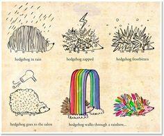 rainbow hedgehog.