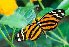 Bekijk tropische vlinders