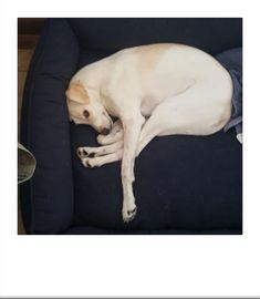 Yoga Dog Meu Professor de Alongamento ! ... Free Coupon Codes, Free Coupons, Yoga, Free Blog, Professor, Animals, Stretching, Teacher, Animales