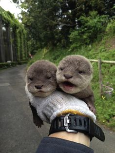 Endearing Baby Otters From This Japanese Zoo Will Steal Your Hearts - DesignTAXI.com