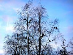 Suomi Finland matkablogi: Taivas on niin kauniin sininen ja valkoinen, kuin Bowien haaremihousut, satiiniset...