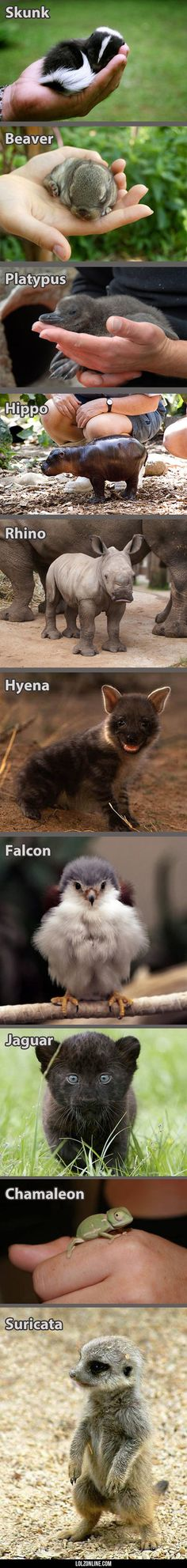 Animals Look So Much Better When Theyre Babies#funny #lol #lolzonline