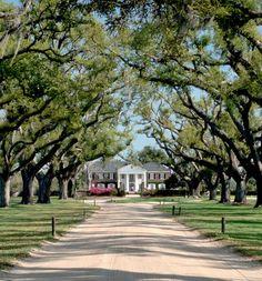 Boone Hall Plantation (Mount Pleasant, South Carolina)