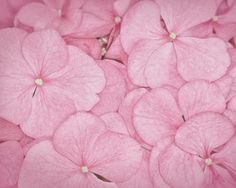 pétalos-de-color-rosa-wallpapers_674_1280x1024.jpg (1280×1024)