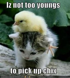 Cutest. Lolcats. Ever.