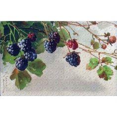 Catherine Klein Black Berries Illustration Art