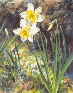 """Daily Paintworks - """"Daffodil Duet"""" - Original Fine Art for Sale - © Catherine M. James"""