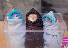 three snug kitties