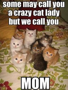 Funny+Animal+Pictures+Of+The+Day+-+25+Pics                                                                                                                                                                                 More
