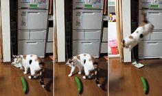 Cette mauvaise blague pourrait traumatiser votre chat à tout jamais